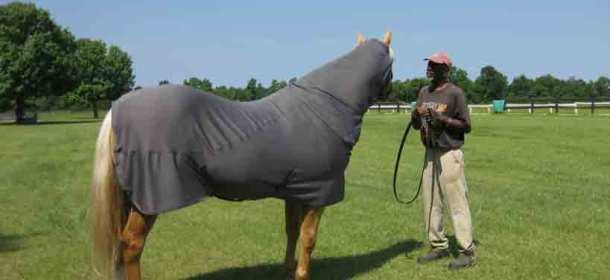 Liquid Titanium blanket & neck cover